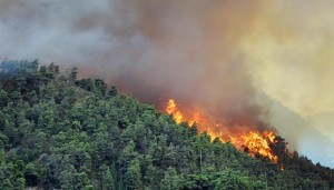 Forest-Fire Aug 30 Linkedin